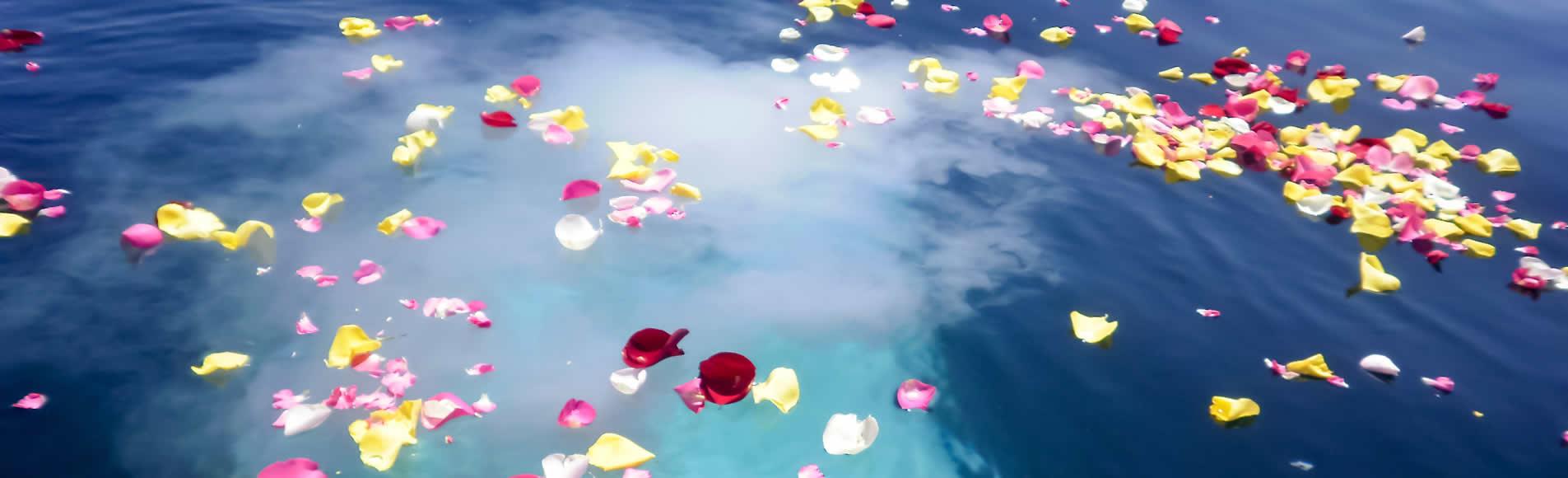 海洋散骨 うみと大地の自然葬